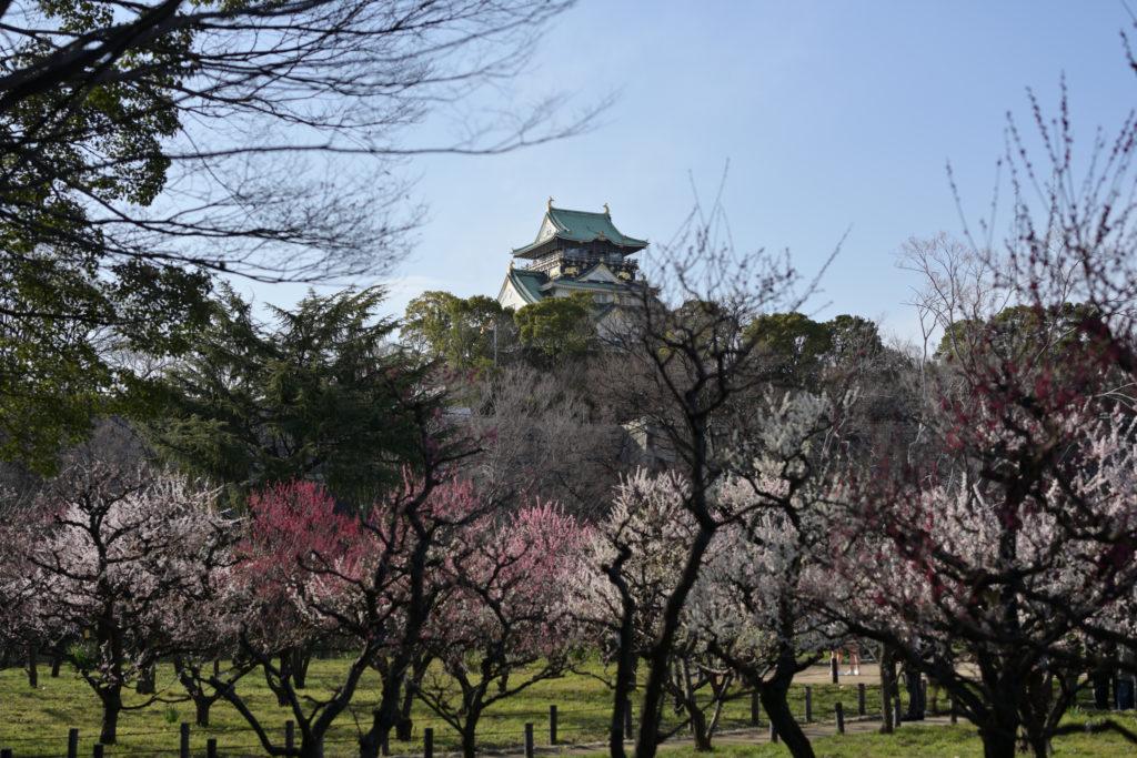 大阪城と梅林の写真